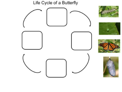 Short Paragraph on Butterfly - Important India